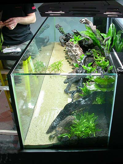 ADG Hosted Joint Club Event (Many Pictures!!!)   Aquascaping   Aquatic  Plant Central