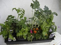 flatofplants