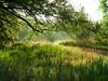 Meadow Medium