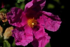 Crumpled Flower