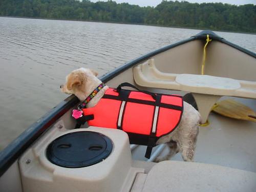 muffin in canoe 3