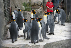 Penguins at Edinburgh Zoo