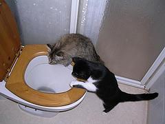 Kissekattor.