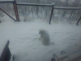 Happy, snowy dog.