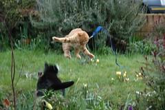 Kitten attack photo by raindog