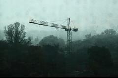 crane in the rain