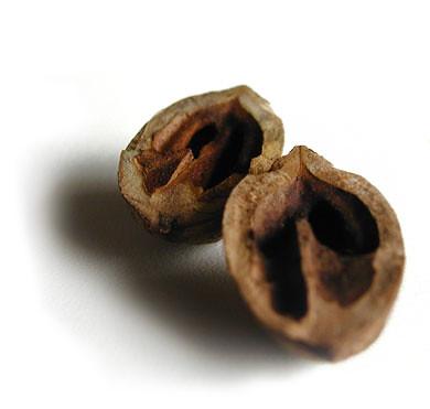 eviscerated shells