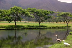 Laguna in Venezuela