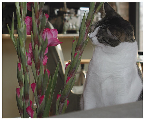 Cleo smells flowers