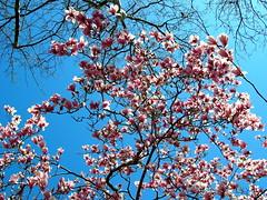 [Bloom from Below]