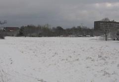 nurmi lumessa