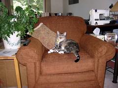 Bonnie's New Chair