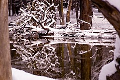 Along the Merced in Winter