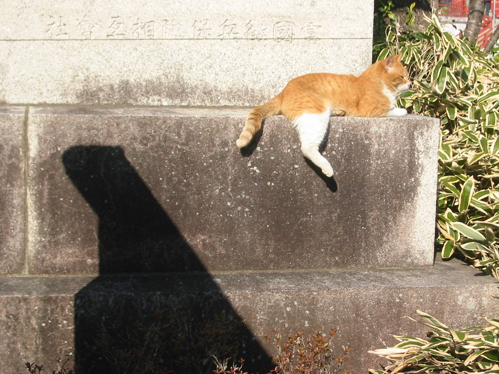 Cat on an old stone lantern