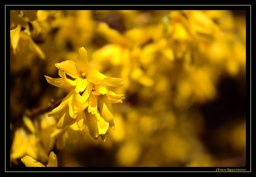 Yellow (framed)