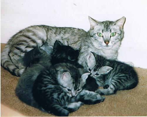Asiel Breda zit bomvol met katten