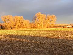 Flat Corn Field