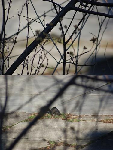 Focus Squirrel