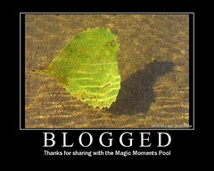 Blogged