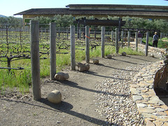 Robert Mondavi Winery - Test plants