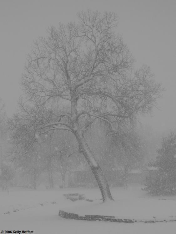 IMG_1700-TreeinBlizzard