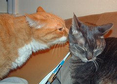 Spike & Boo: yellow tabby & grey tabby