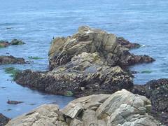 Restless Sea - Rocks