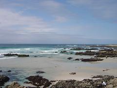 Bird Rock - Beach