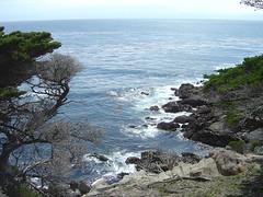 Lone Cypress - Coast II