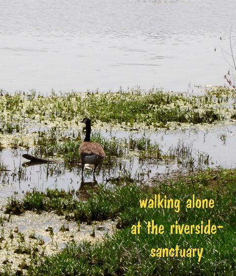 walkingalone_00