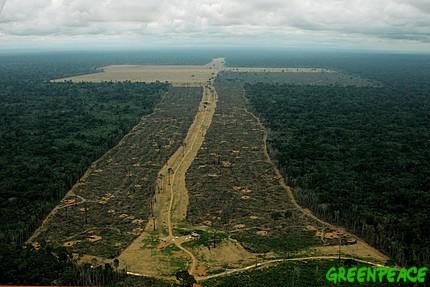 270406-deforestacion