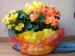 512421_flowers