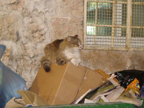 cat 244/248