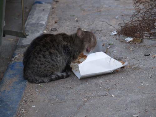 cat 55/248