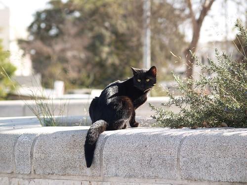 cat 68/248