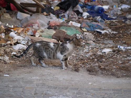 cat 93/248