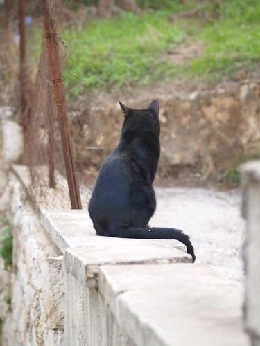 cat 146/248