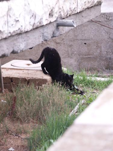 cat 161/248