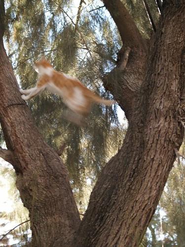 cat 166/248