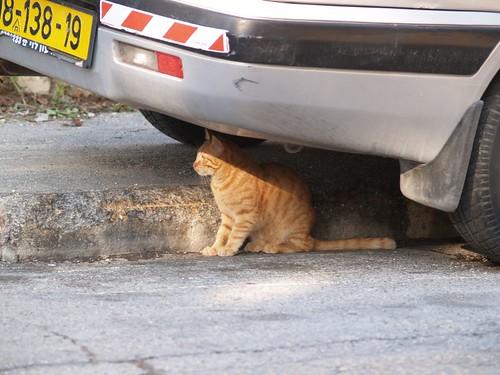 cat 165/248