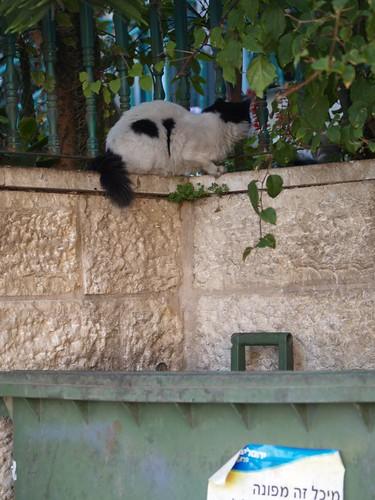 cat 169/248