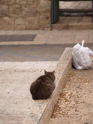 cat 182/248