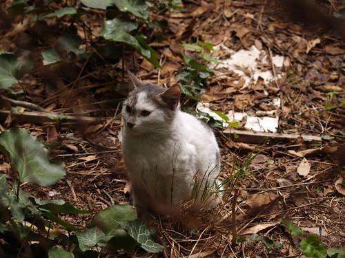 cat 179/248
