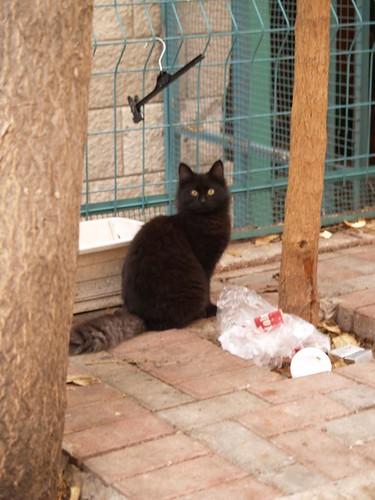 cat 189/248