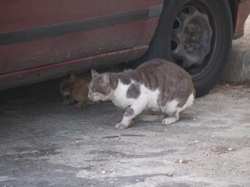 cat 199/248