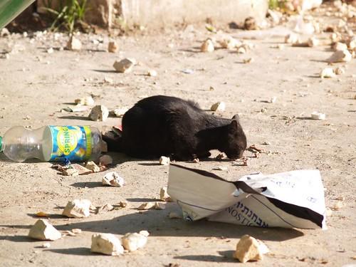 cat 214/248