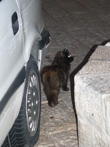 cat 241/248