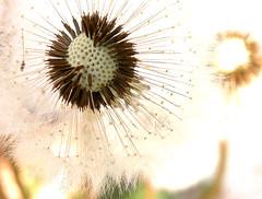 weeds8
