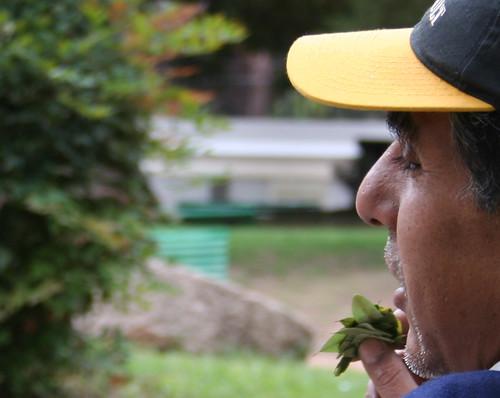 comiendo hojas de coca