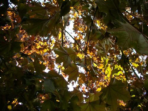 02-Leaves